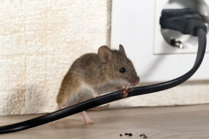 Pest Control in Parson's Green, SW6. Call Now! 020 8166 9746