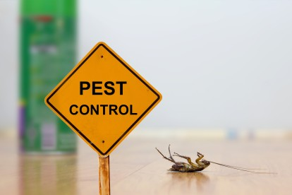 Pest Contol in Parson's Green, SW6. Call Now 020 8166 9746